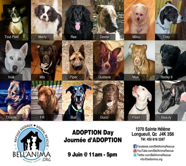 adoptionDay2-02 (1)