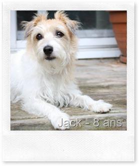 jack 029